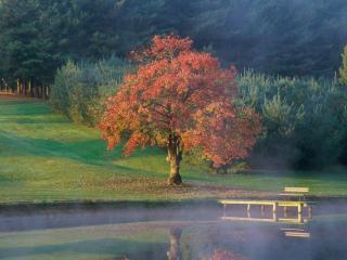 обои Спокойное осеннее утро на пруду фото