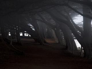 обои Сказочный лес фото