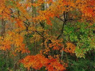 обои Осенний лес меняет цвет листьев фото
