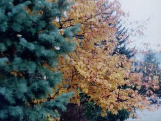 обои Смешанный лес осенью крупным планом фото