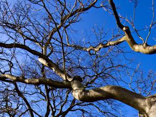 обои Ветви высокого весеннего дерева фото