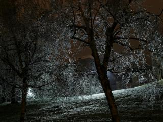обои Деревья под цвет ночных фанарей фото