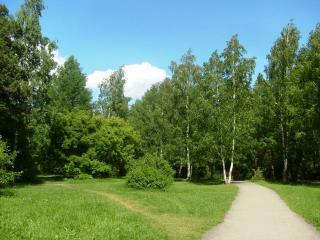 обои Дорожка в парке фото