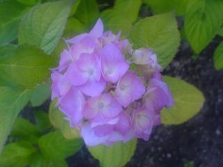 обои Фиолетовый цветочек фото