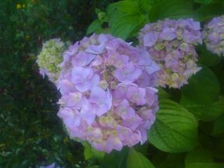 обои Фиолетовый кустик фото