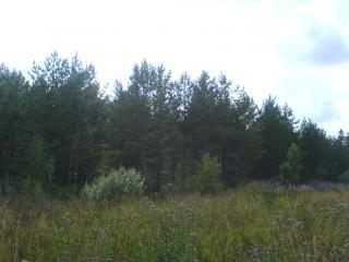 обои Лесной пейзаж фото