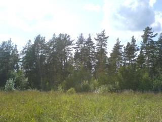 обои Лес на пригорке фото