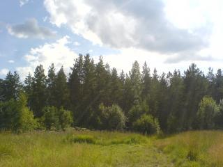 обои Лес и лучики солнца фото