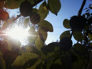 обои Лучи солнца,   ягоды,   небо фото