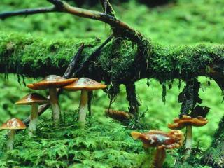 обои Маленькие грибочки фото