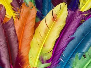 обои Разноцветные перья фото