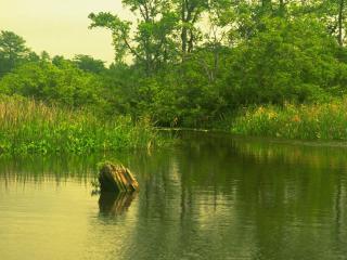 обои Тихая заводь летнего пруда фото