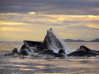 обои Морские обитатели,  поднявшие множество брызг фото