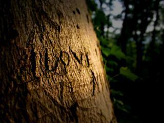 обои Надпись на дереве фото