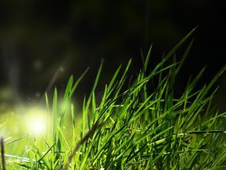 обои Зеленая трава в блике фото