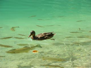 обои Плитвицкие озера фото