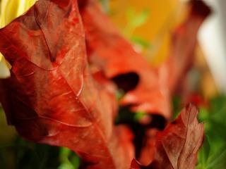 обои Осенний лист клена фото