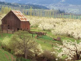 обои The Promise of Spring,   Mosier,   Oregon фото