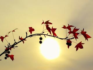 обои Осенняя веточка на фоне заходящего солнца фото