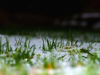 обои Зеленая трава под снегом фото
