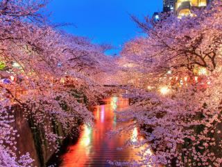 обои Природа японии фото