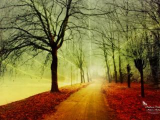 обои Осенняя пора очей очарование фото