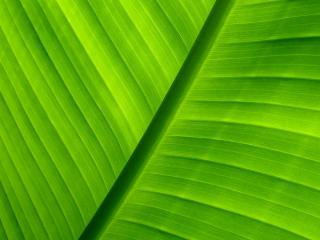 обои Зеленый лист бамбука фото