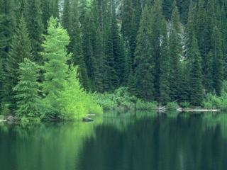 обои для рабочего стола: Озеро у леса