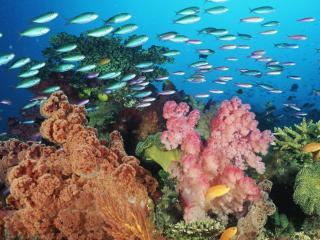 обои Косяк рыб на фоне кораллов фото