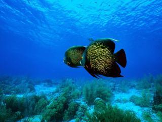 обои Желто-черные жительницы глубин моря фото