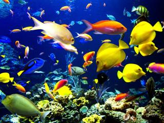 обои Разнообразие рыб фото