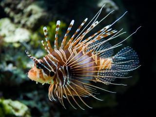 обои Уникальная океанская рыба фото