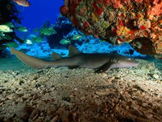 обои Хитрый хищник моря фото