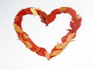 обои Сердце из листьев фото