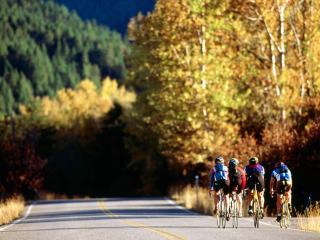 обои Группа велосипедистов фото