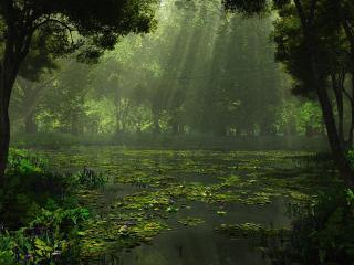 обои Загадочное красивое лесное озеро фото