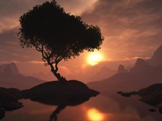 обои Одинокое дерево у воды. На закате фото