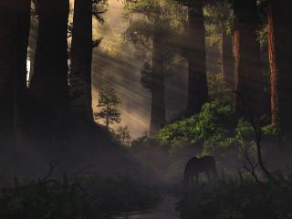 обои Сказочный дремучий лес фото