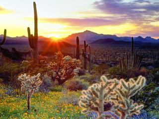 обои Красота цвета в горах, кактусы фото