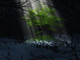 обои Луч солнца оживил природу фото