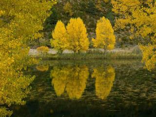 обои Золото деревьев у осеннего пруда фото