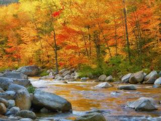 обои Река цвета осени фото