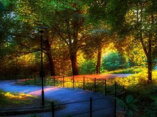 обои Вечером в парке фото