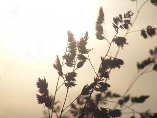 обои Трава на солнце фото