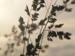 обои Осень на природе фото