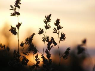 обои Последние лучи,   трава фото