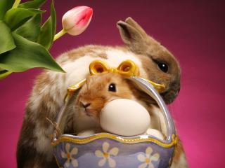 обои Кролики на яичках фото