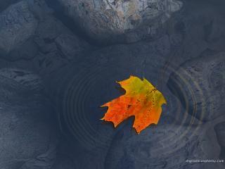 обои Кленовый лист на поверхности каменистого пруда фото