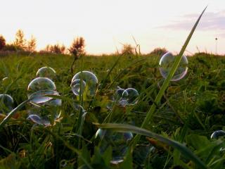 обои Мыльные пузыри,   поле,   вечер,   трава фото