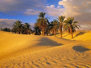 обои Desert Oasis,   Tunisia фото